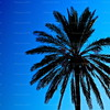 "Blue Palm<br /> ""Cross my palm with blue... and ye shall be granted solace,"" whispered the wizened wytch of Acre, with viperous veiled eyes and a hidden heart."