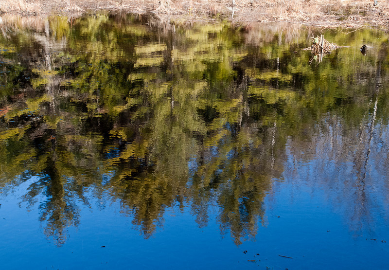 An almost mirror-like finish in a beaver pond at Pulpit Rock Conservation area.