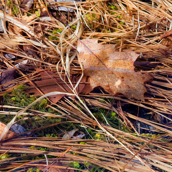 Leaves, grass and moss in a crystal clear bog at Pulpit Rock Conservation Area