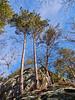 Quincy Bluffs pine barrens