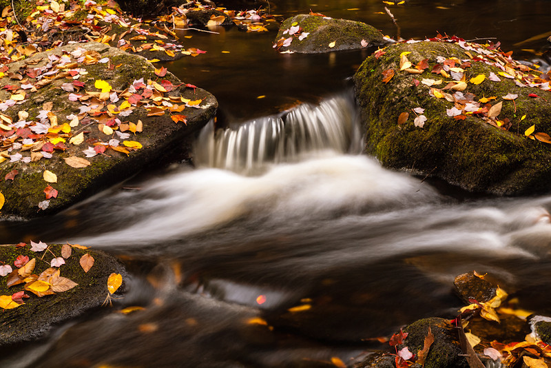 A small detail of Purgatory brook, strewn with the produce of fall.