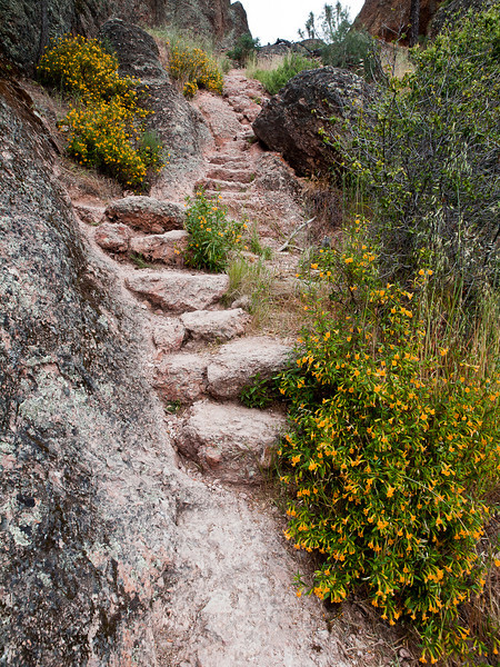 this is nothing compared to other areas of this trail which is the Tunnel Trail from High Peaks at Pinnacles National Monument.  The flowers are sticky monkeyflowers, ever known to us as stinky monkey-butt flowers even though they are not stinky and don't resemble monkey butts.