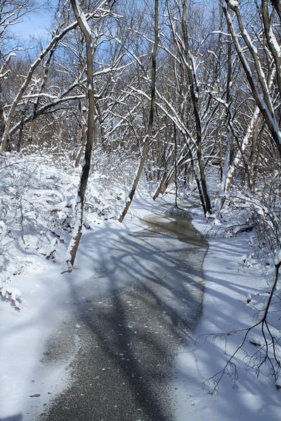 Pheasant Branch Creek