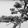 Meijer Gardens; Japanese Garden