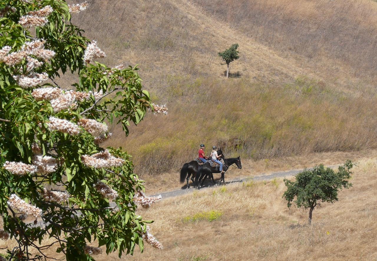 horses_buckeye_oak seedlings_P1100708