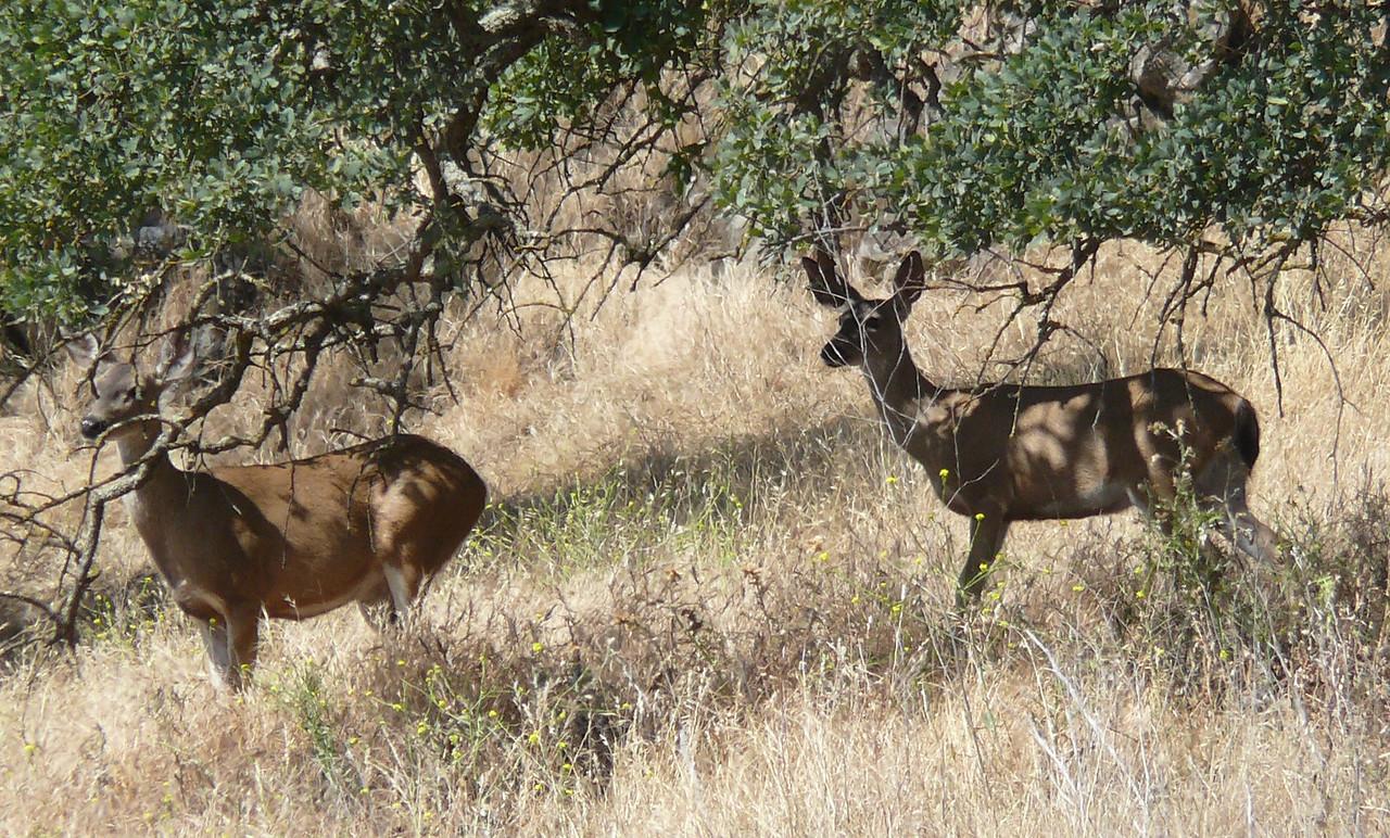 two deer_P1100766