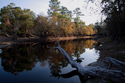 Okefenokee Swamp, Georgia November 2006. http://globalvillagestudio.com/index.html