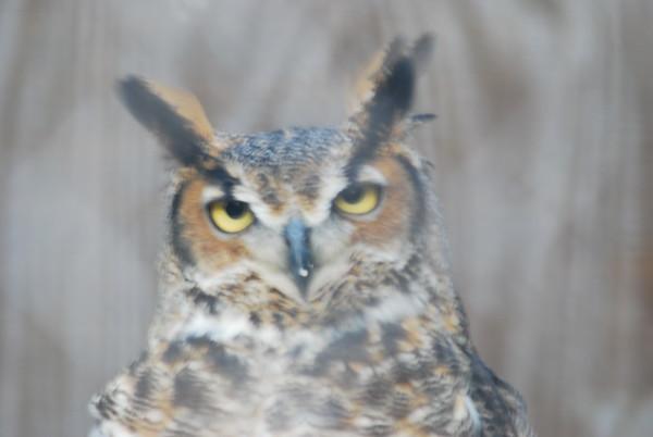 Owl at Camp Hashawa.