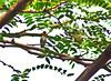 Humming Bird sitting in tree