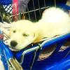 Shopping trip to Pet Smart