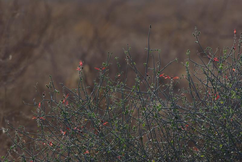 Delicate desert flowers...