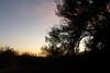 Sunrise in Borrego Springs.