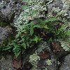 Plants, ferns and lichen on the rock