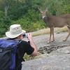 Deer posing for a Kiwi