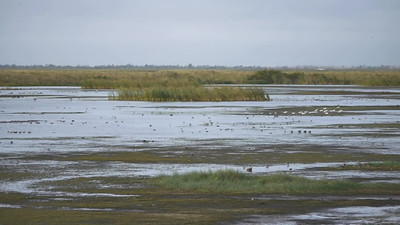 Video   (Click ► to play)  This video might help people who have not yet attended these trips get an idea of how vast and bird-filled this area is. The video is of only one of many stops we made.