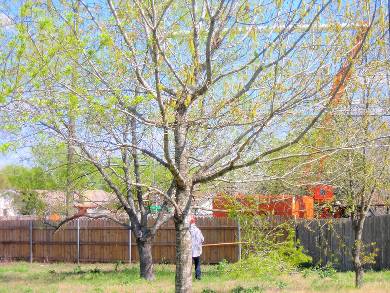 Man in Backyard <br /> Hard hat in my backyard pulling cut limbs out of my tree.<br /> <br /> Taken through the back door. Zoomed 3x.