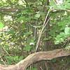 BigChestnut825A-2 trunk
