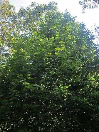 827-825 Byrds Nest 3 to Thornton Gap 2012-08-16