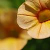 DSC_2701