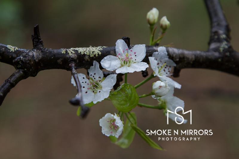 White Easter Bloom