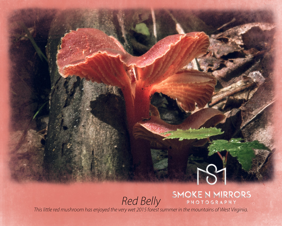 Red Belly 8 x 10