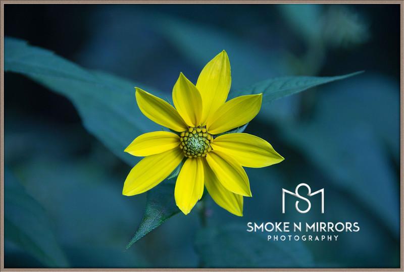 WV Sunflower