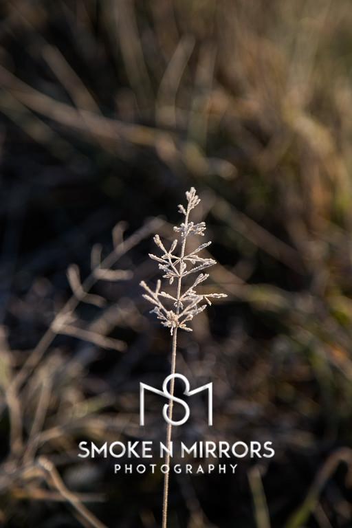 Icetree