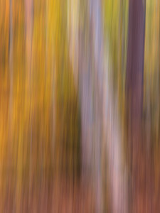 Autumn Directional