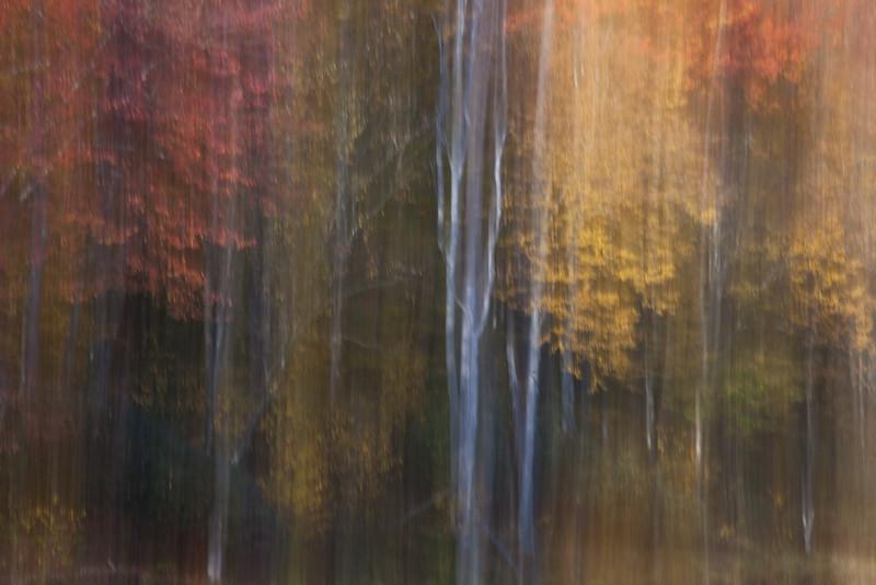 Assending Autumn<br /> (IMG_2056)