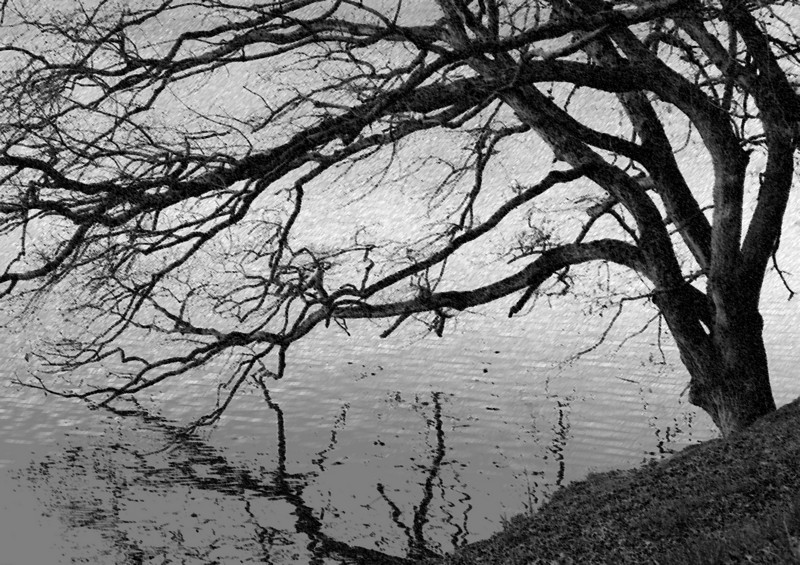 """Reaching Branches""  A bare tree reaches across a lake.  Photoshop filters applied."