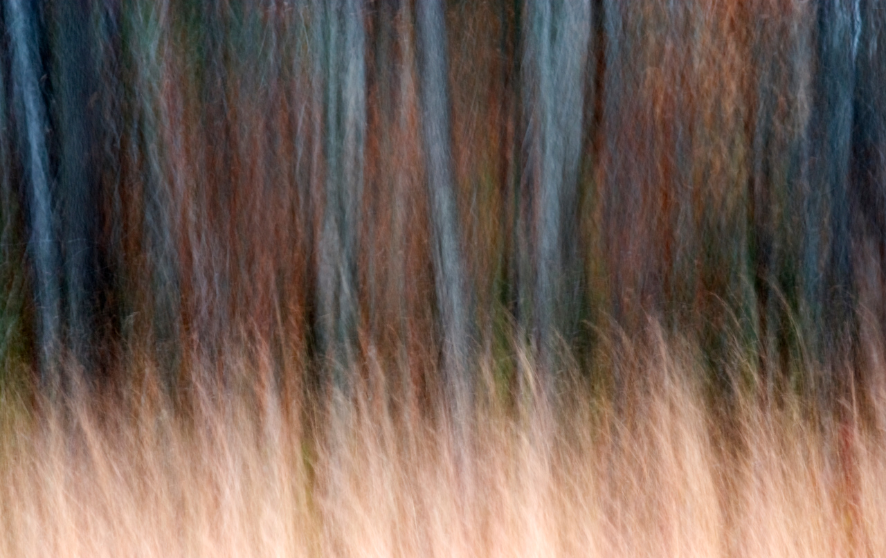 What lies beyond the grasses in the woods?