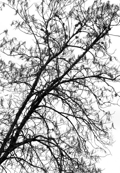 Photoshop effects applied to an image of a bare tree.