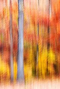 An abstract image of fall colors in the trees.