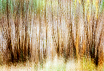 An abstract image of fall bushes.