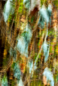 An abstract image of Kudzu vines.