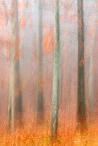 An abstract rendition of winter trees.