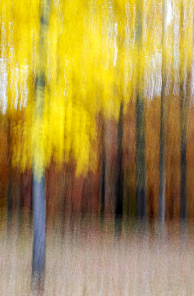 An abstract image of a yellow fall tree.
