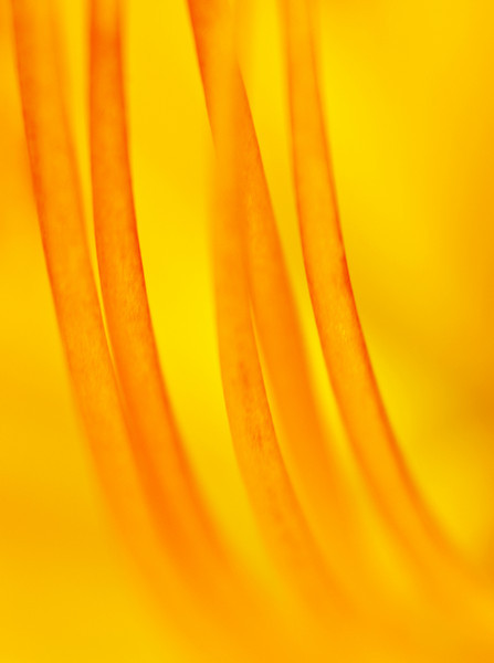 The inside of a daylily.