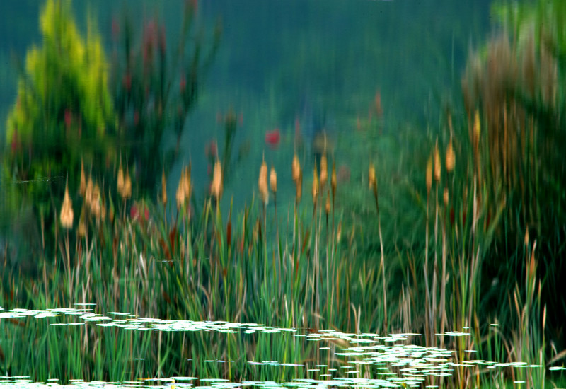 Reflections of cattails on a lake, inverted, Photoshop effects applied.