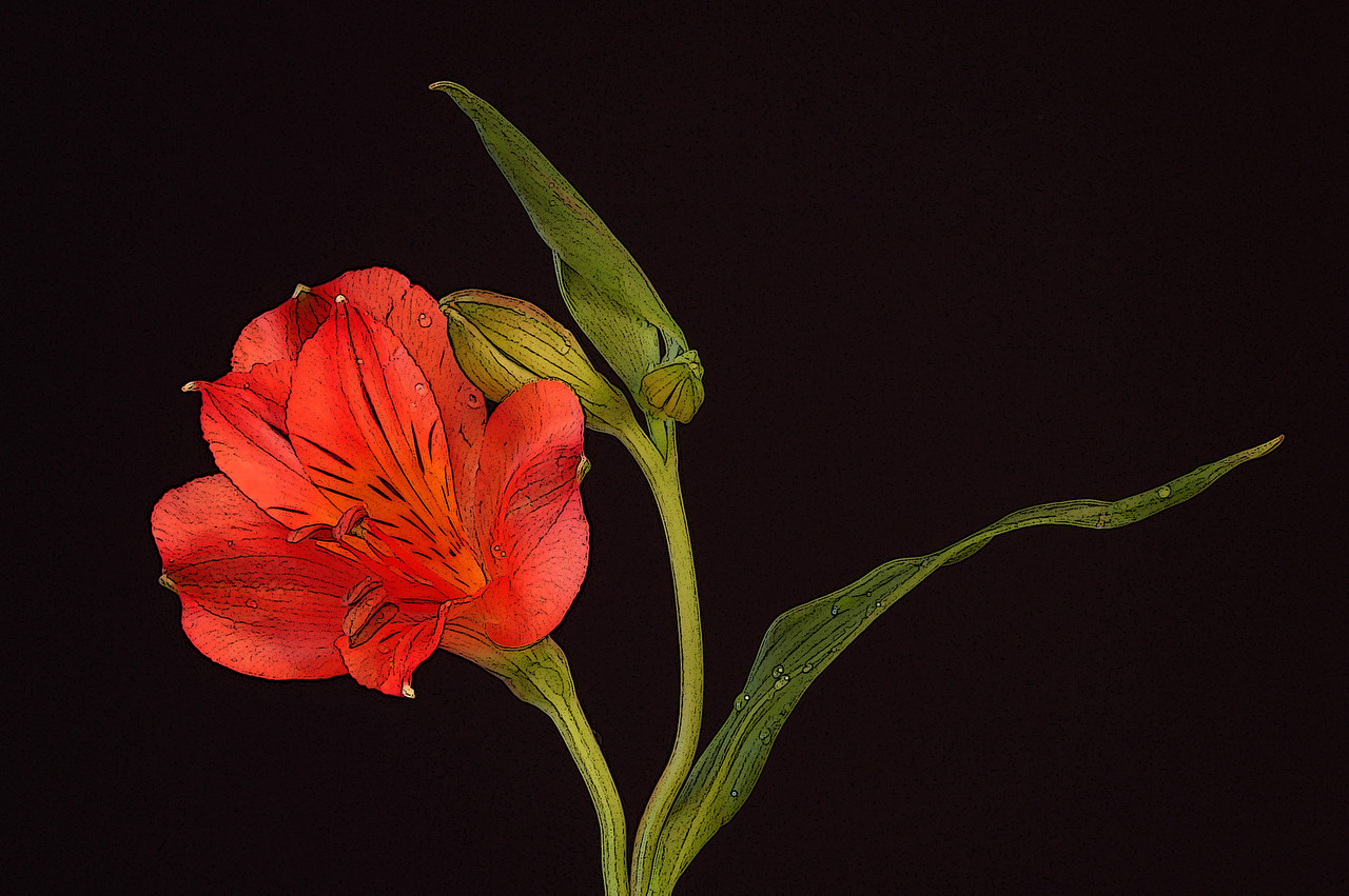 A photo of a red flower with Photoshop filters applied.