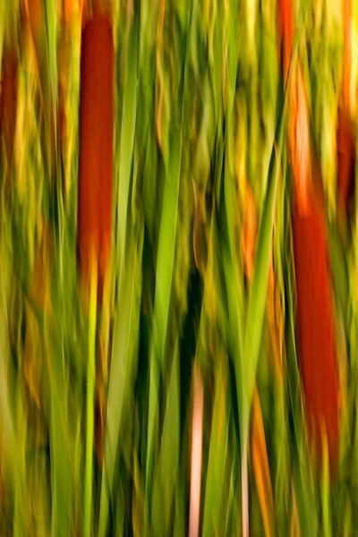 Cattail abstract