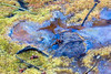 Vernal pool fantasy 2