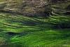 Undulations 2 (seaweed)