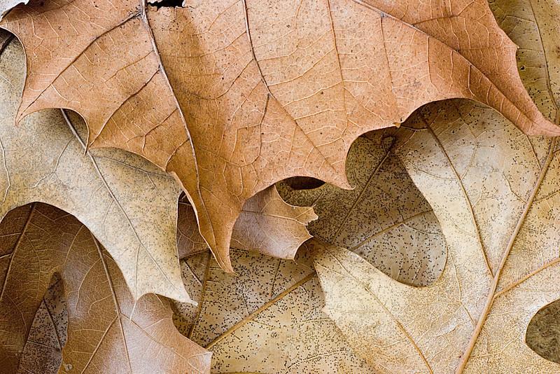 Dead leaf still life