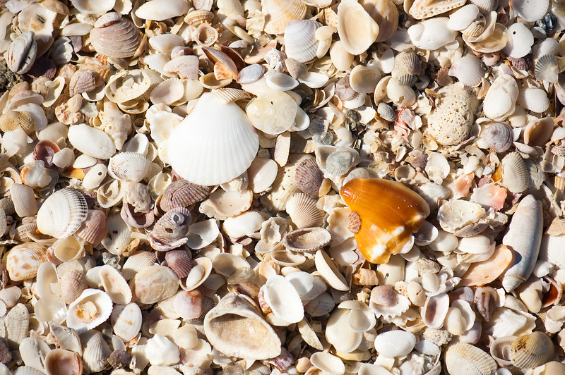 Shells Sanibel Island-5863