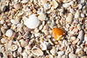 Shells Sanibel Island-5863