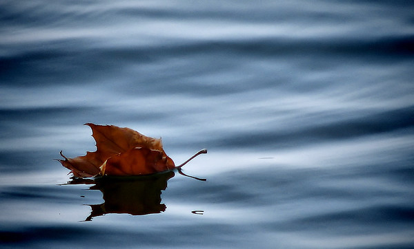 A maple leaf floating on water (20080921_12654)