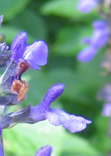 Dew on flower petals (202_0293_dew)