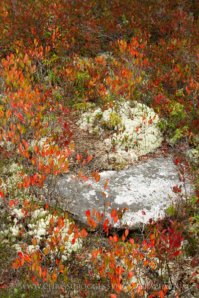 Acadia Fall Color
