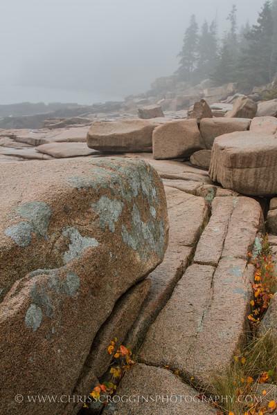Acadia Granite and Fog